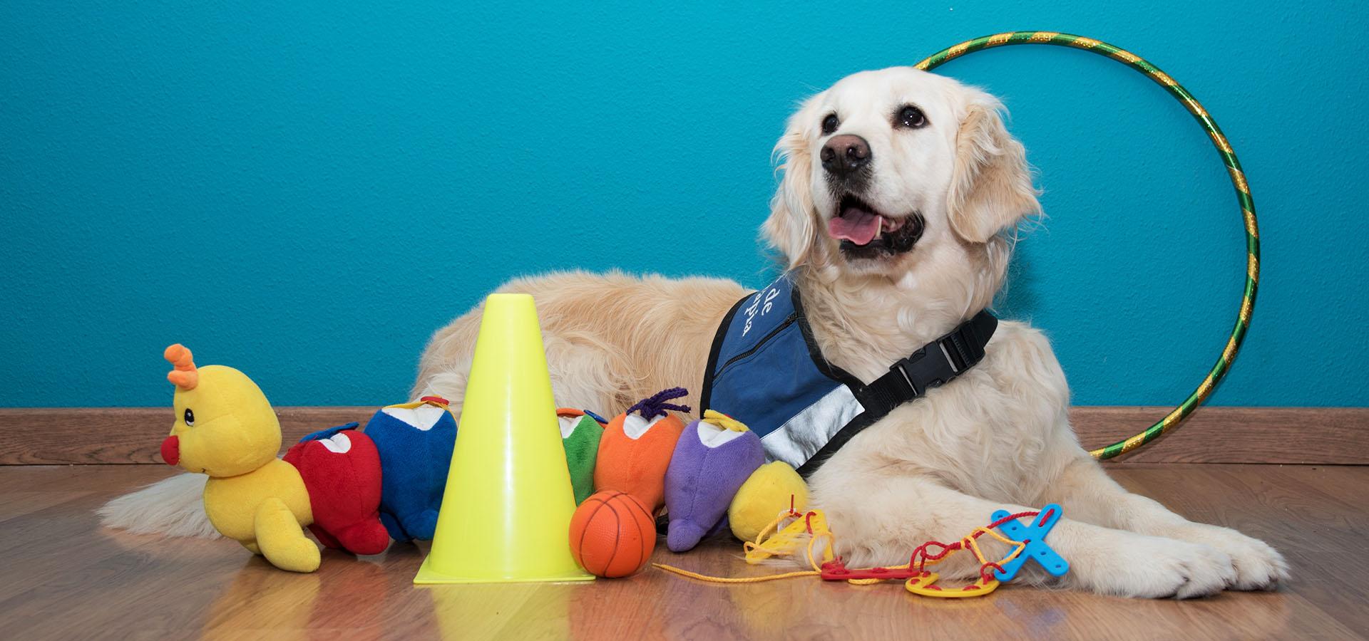 Xula_terapia_assitida_amb_gossos